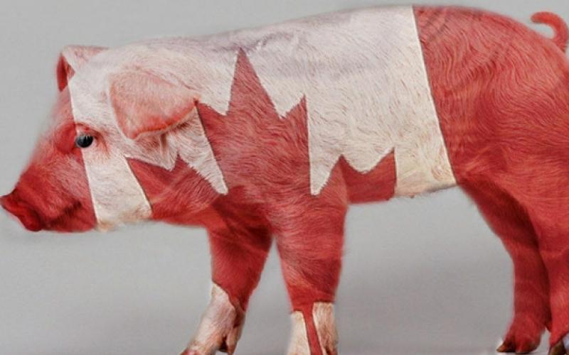 211107-canadian-pork-story.jpg